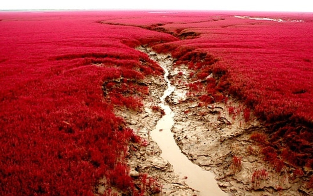 Red-Seabeach-Pinjin-China