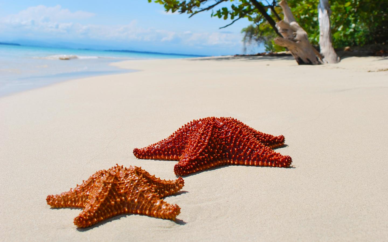 Starfish-Beach-panama