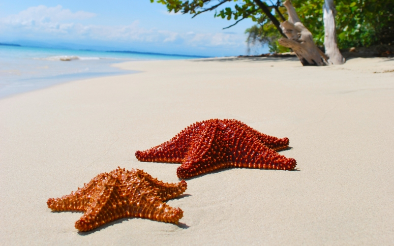 Starfish-Beach-panama