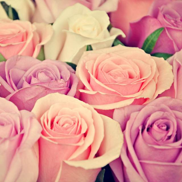 rosemainimageindd