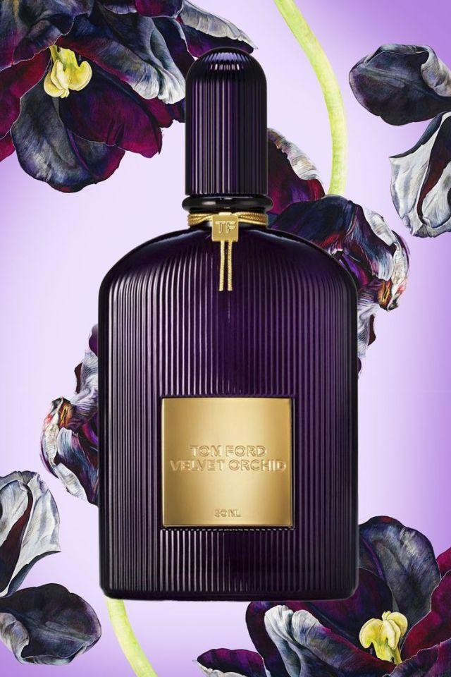 Tom-Orchid-Velvet-Orchid.jpg