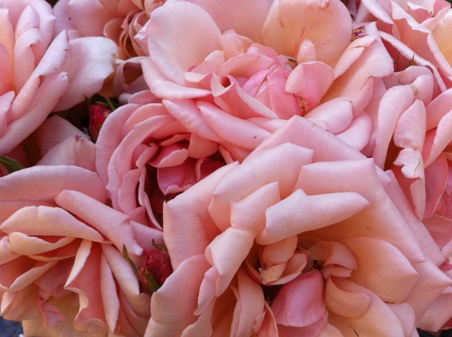 Guerlain Eau de Lingerie Roses.jpg