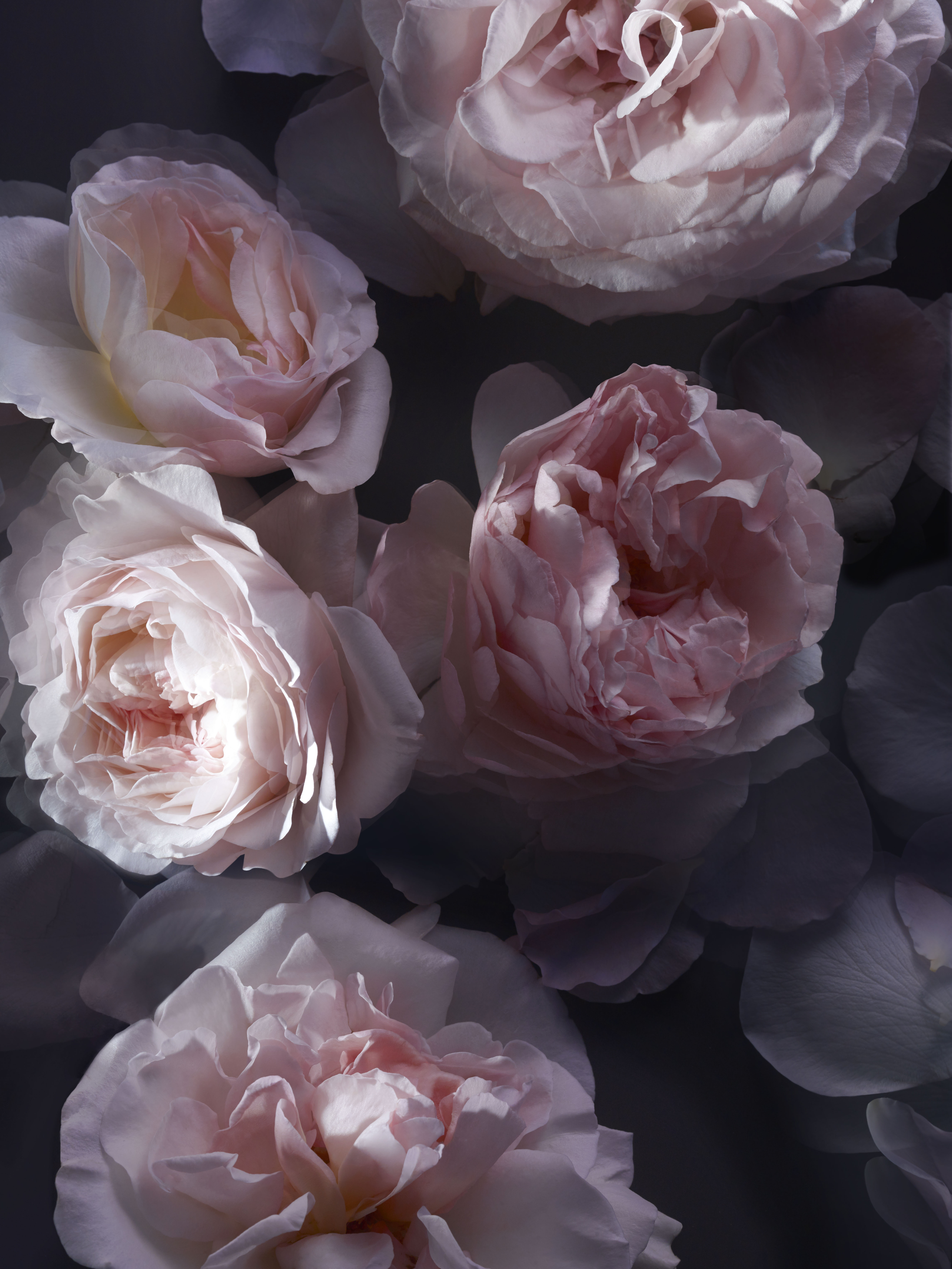 Nina Ricci LEXTASE_CARESSE-DE-ROSES_Ingredients-1