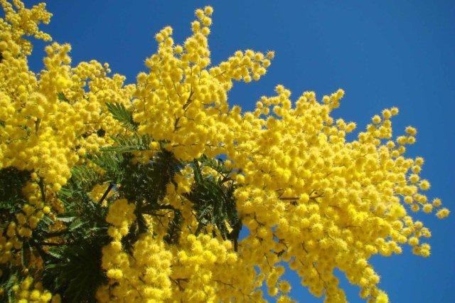 Mimoso Le Cannet.jpg
