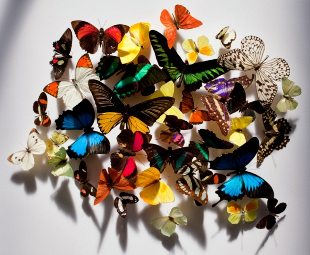 Kenzo Madly Kenzo! Kiss 'n Fly Butterflies