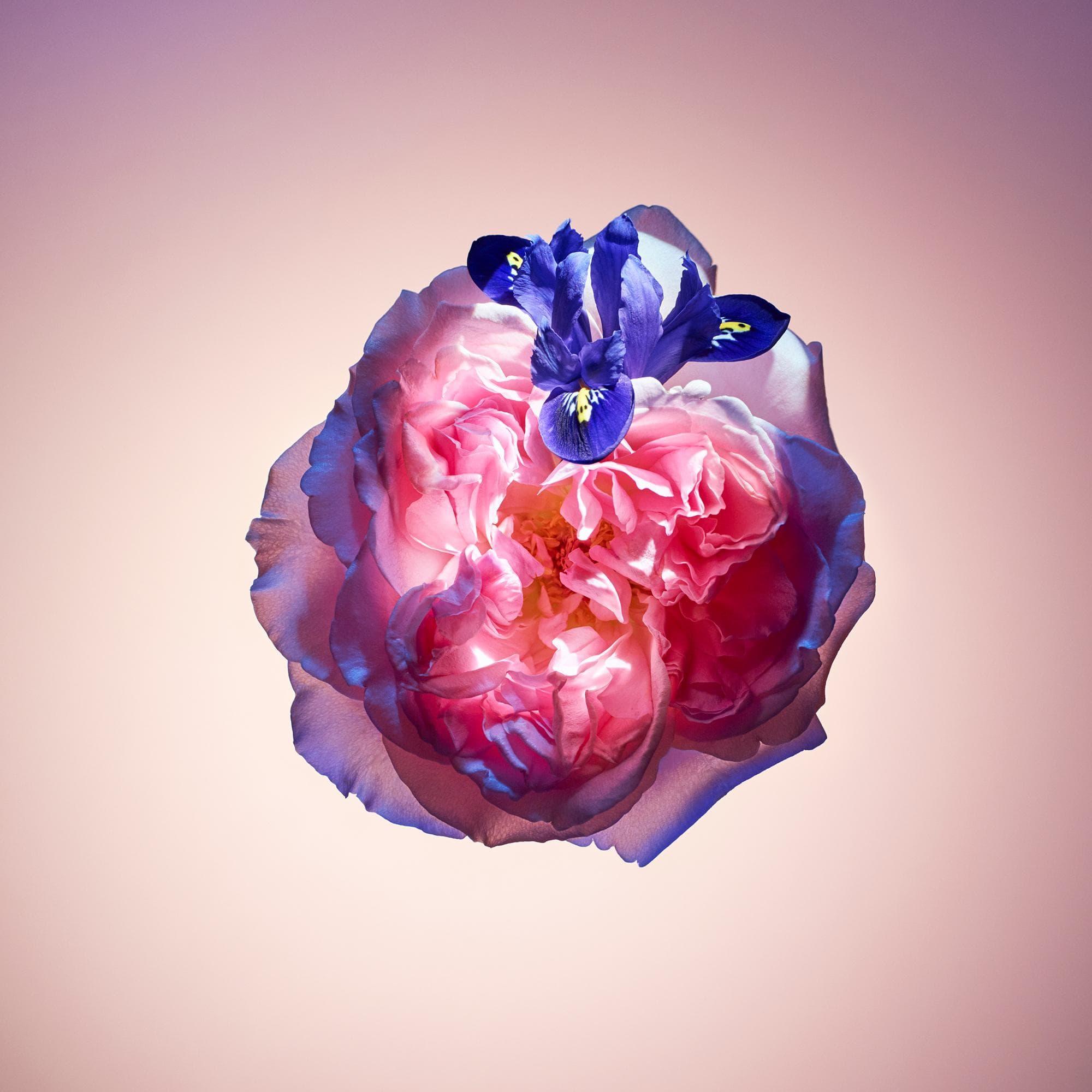 louis-vuitton-rose-des-vents-fragrances--LP0005_PM1_Other%20view1.jpg