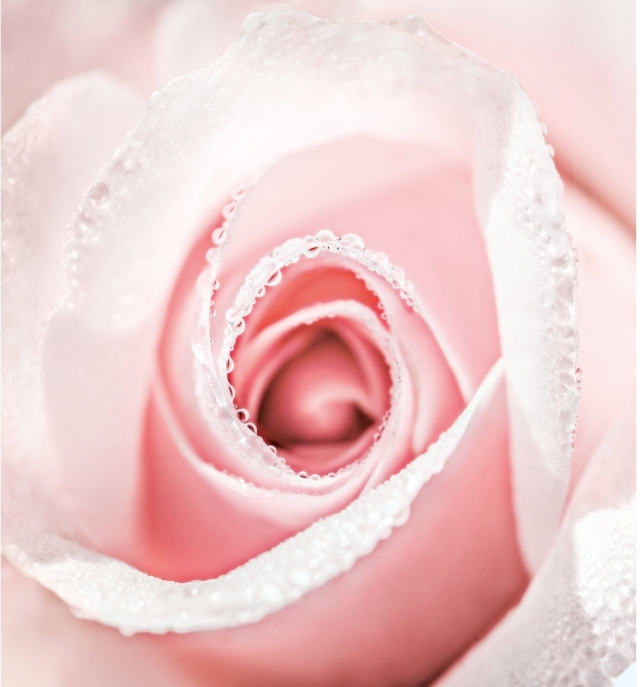 Dior-Prestige-La-Micro-Huile-de-Rose-Banner-01