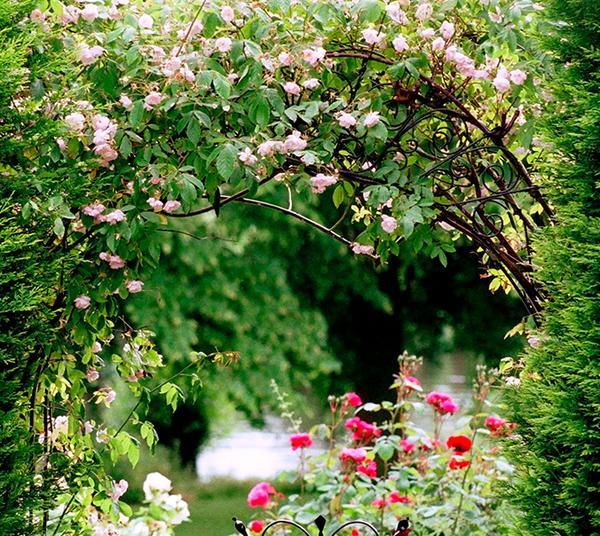 Chantecaille-Centifolia-Rose-Garden.jpg